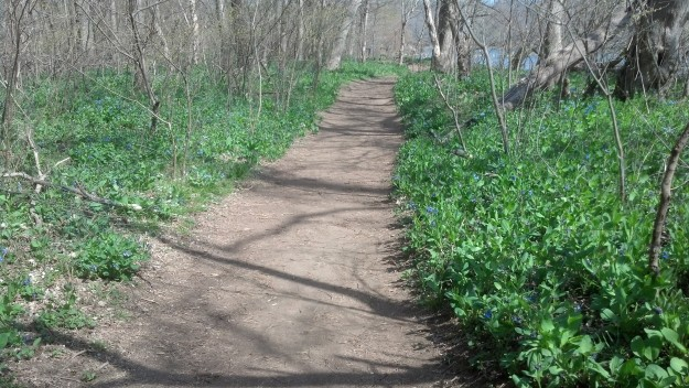 Come enjoy the trails lined with Virginia bluebells.