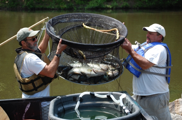 Contractors remove fish from Huntsman Lake.