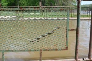 Snake on a Fence