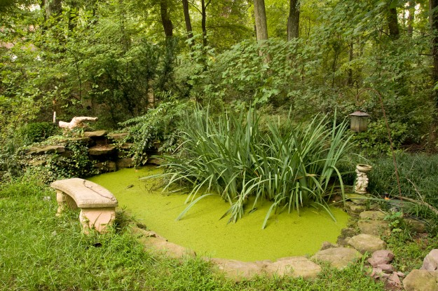 Replacing turf lawns with native plants creates favorable habitat for wildlife.