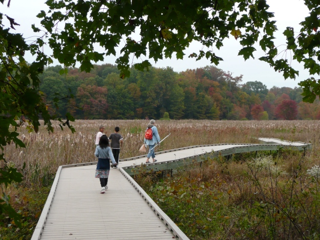 The boardwalk at Huntley Meadows leads visitors into the heart of the wetland.