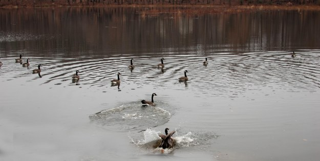 Wildlife is returning to Huntsman Lake.
