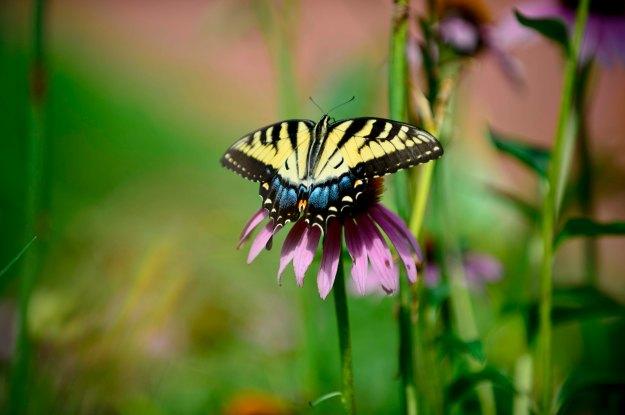Butterfly_072313_0172