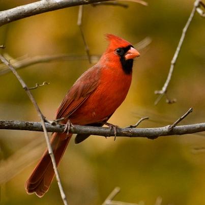 Blog-Cardinal