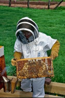 beekeeping ECL
