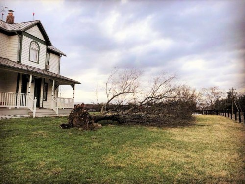 Kidwell Farmhouse fallen tree 2018