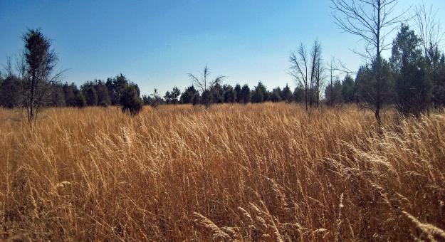 Western Field at Elklick