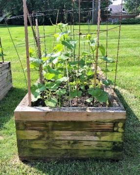 Garden a1