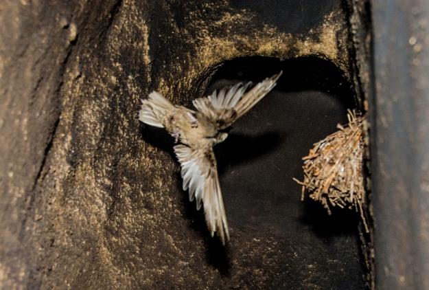 Sully Birds157