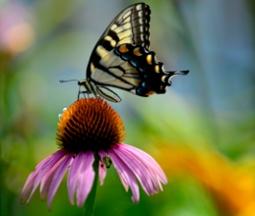 Twitter butterfly
