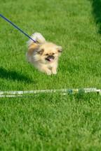 FP Dog Agility_051717_0509