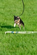 FP Dog Agility_051717_0520