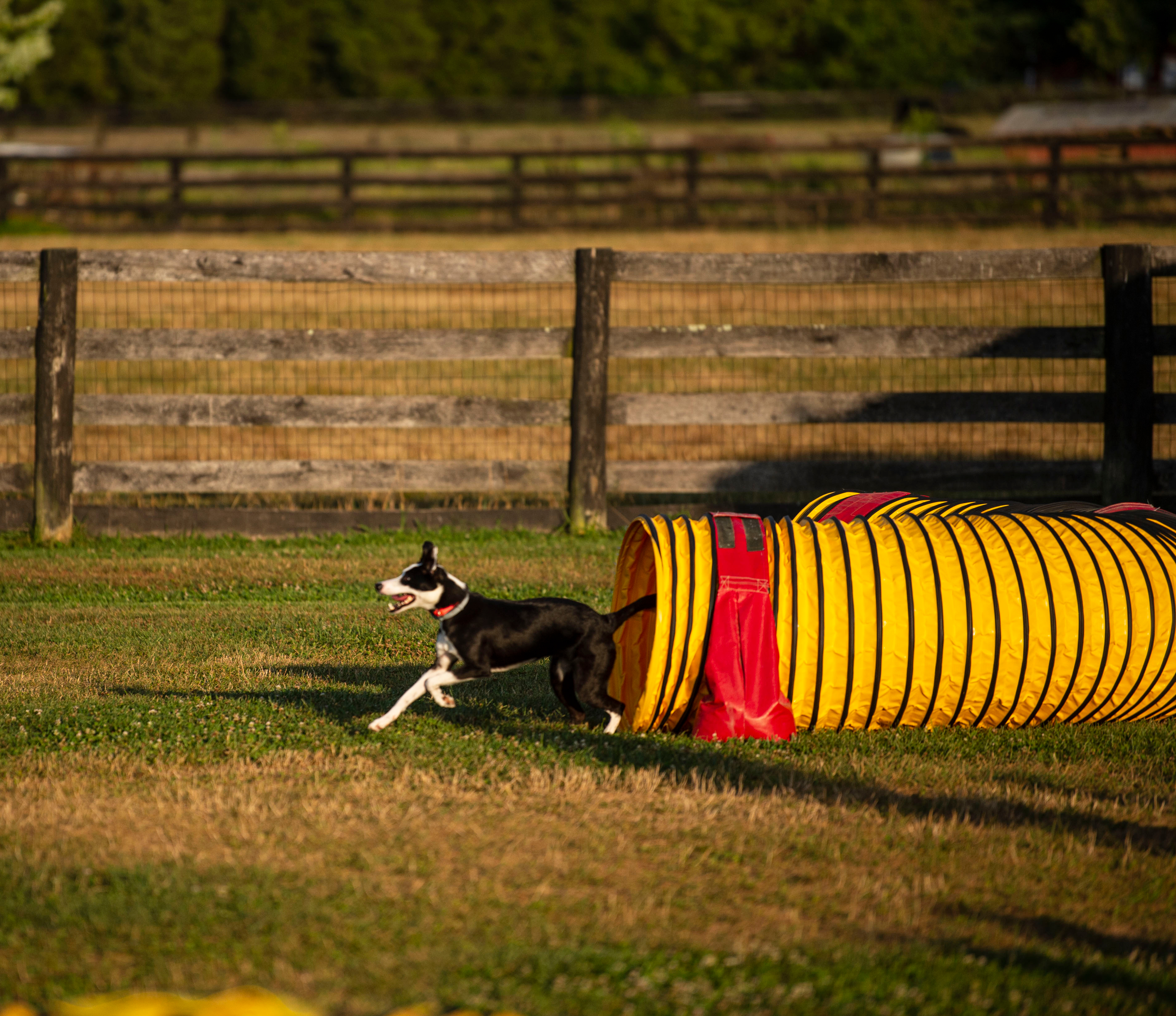 Create A Dog Agility Course In Your Own Back Yard