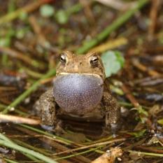 frog021