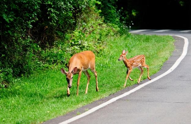 Lake FX Deer_062713_0958
